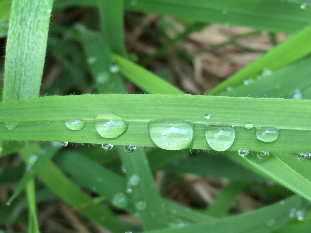 Detox Woche mit grünen Smoothies